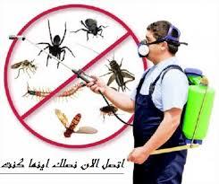 شركه مكافحه الحشرات بجده